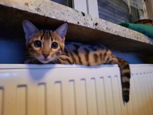 Kitten Mädchen Nauri x Ultimate