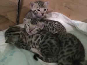 Babies Iris