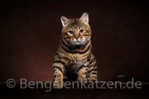 Leopardcats Jalapeno of Spice