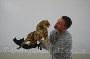 kater-bengal-brown-jalapeno-leopardcats-8